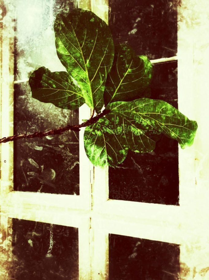 Die Pflanze in K.